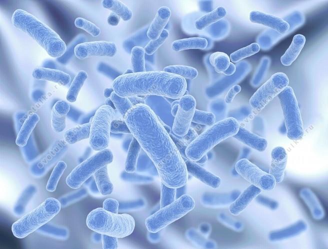 Энтеробактерии в мазке – Энтеробактерии в мазке у женщин