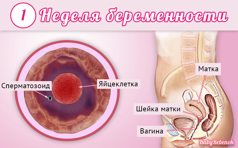 Симптомы беременности при первой недели беременности – 1-2 , ,