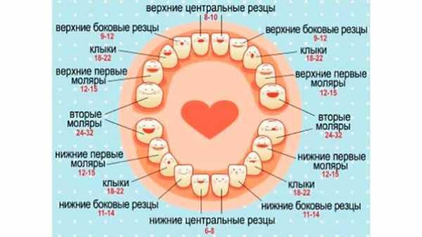 Как лезут зубы схема фото 826